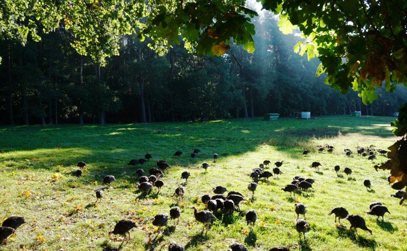 BIOgrafia unui furnizor: Freiland Puten – carne de pasăre 100% bio