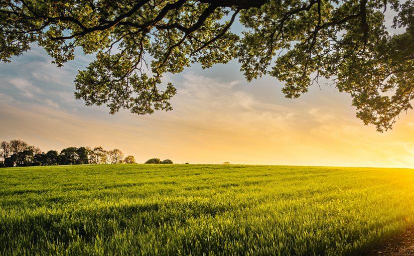 Dietele bio ajută mai mult la menținerea siluetei